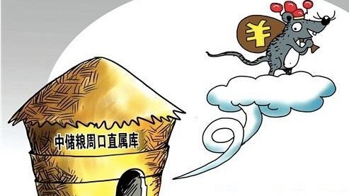 """China """"lost"""" 400 tons of strategic grain reserve in 6 days"""