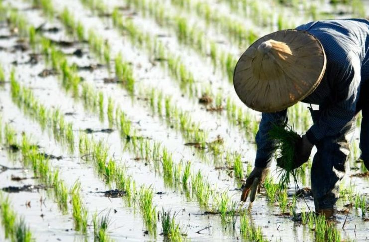 Over 2500 Tons of Heavy Metal Contaminated Rice Found in National Grain Reserve–20201007
